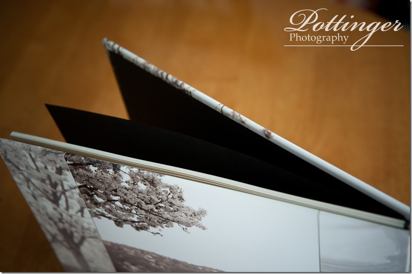 PottingerPhotoEngagementBookEdenParkEngagementPhoto9