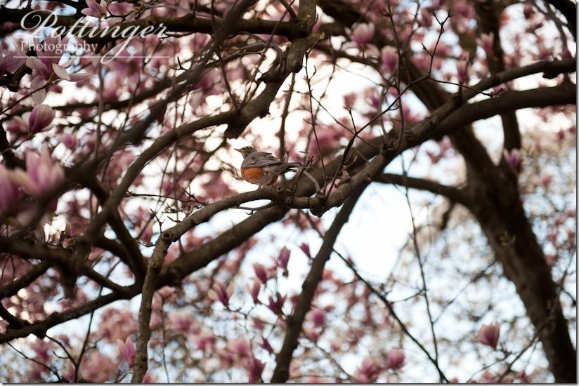 PottingerPhotographyCincinnatiWeddingPhotographerBlogSpringEdenPark (1 of 1)