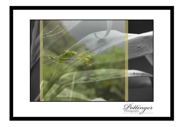 PottingerPhotogrphy.comFineArtFriday1