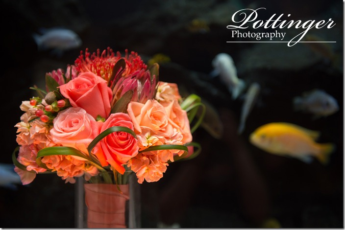 PottingerPhotographyNewportAquariumWedding2